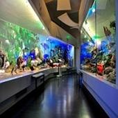 Muzeul Grigore Antipa, Bucuresti